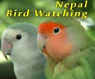 Bird Watching in Nepal